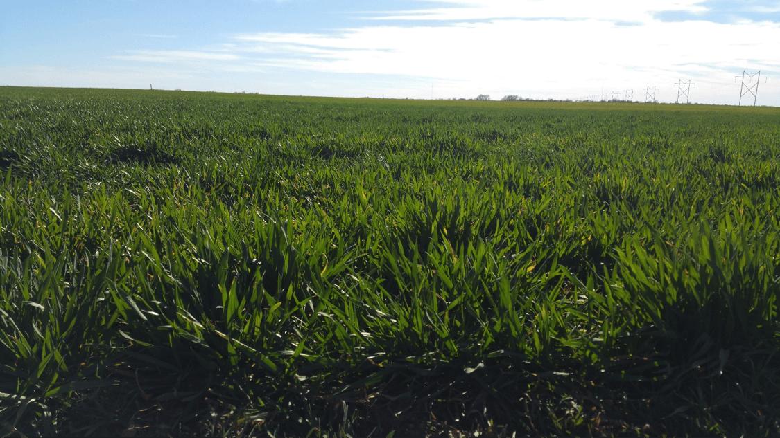 ICT Food Circle - Kansas Wheat