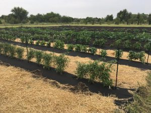 Growing Growers Coming to Wichita?